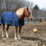 Horse in dirt field wearing a blue horse blanket next to a ball