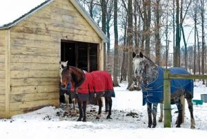 Two horses next to barn wearing horse blankets