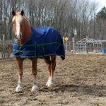Horse in dirt field wearing a horse blanket