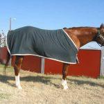 Horse in dirt field wearing a dark blue horse blanket